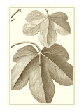 Cropped Sepia Botanical III