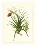 Exotic Flora III