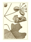 Cropped Sepia Botanical I
