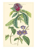 Botanique III Reproduction d'art par Jacob Dietrich