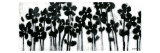 Black Flowers on White II Reproduction d'art par Norman Wyatt Jr.