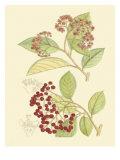 Berries & Blossoms II