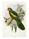 Gould Parrots II
