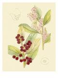 Berries & Blossoms VI