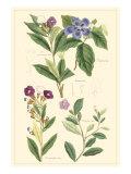 Botanical I Reproduction d'art par Jacob Dietrich