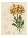 Floral Pairings III