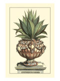 Antique Munting Aloe IV