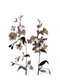Watermark Wildflowers III