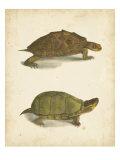 Turtle Duo IV