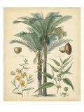 Fruitful Palm I