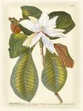 Magnificent Magnolias II Reproduction d'art par Jacob Trew