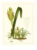 Exotic Flora IV