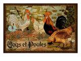 Coqs et Poules