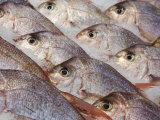 Fresh Seafood Sits on Ice Ready at Sydney's Fish Market at Pyrmont  Australia