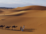 Berber Tribesmen Lead their Camels Through the Sand Dunes of the Erg Chegaga  in the Sahara Region