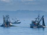 California  Monterey  Fishing Boats  USA