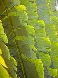 Plants and Vegetation of the Crocker Range Rainforest in Sabah  Borneo