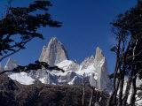 Santa Cruz Province  Cerro Fitzroy  in the Los Glaciares National Park  Framed by Trees  Argentina
