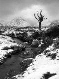 Lonely Tree in Rannoch Moor  Scotland  UK