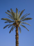 Palm Tree Growing in Karnak Temple  Luxor  Egypt