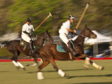 Polo  Houston  Texas  United States of America  North America