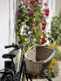 Bicycle with Basket and Hollyhocks  Ars-En-Re  Ile De Re  Charente-Maritime  France  Europe