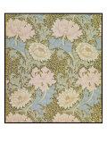 Chrysanthemum' Wallpaper  1876
