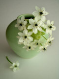 Still Life Photograph  a Green Vase with Ornithogalum Flowers