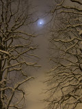 Night Image of Trees Bathed in Artificial Light from City Lights and the Full Moon