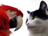 The Parrot and the Cat