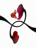 A Butterfly and Two Poppy Flowers with Geometry Paper as the Background
