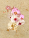 Pink and White Flowers on a Textured Surface