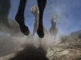 Wild Horses Kick Up Dirt as They Gallop Through the Dry Nevada Desert