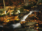 Tumbling Run Along the Appalachian Trail