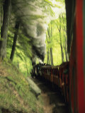 View of the Cass Scenic Railroad Train from the Caboose