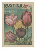 Plantez des Tulipes