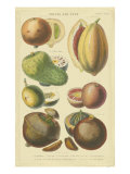 Fruits et noixI Reproduction d'art par Vision Studio