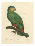 Barraband Parrot No 110