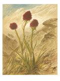 Alpine Florals IV