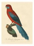 Barraband Parrot No 78