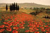 Hills of Tuscany I