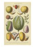 Fruits et noixII Reproduction d'art