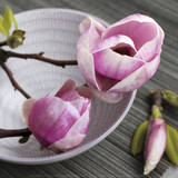 Magnolia on a Bowl