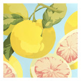 Fresh Grapefruits Giclée premium par Martha Negley