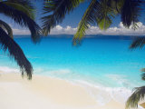 Empty Beach and Palms Trees  Seychelles  Indian Ocean  Africa