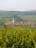 Vineyards and Villages Along the Wine Route  Alsace  France  Europe