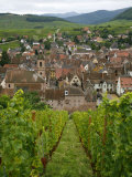 View over the Village of Riquewihr and Vineyards in the Wine Route Area  Alsace  France  Europe
