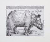 Rhinoceros  c1515