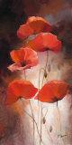Poppy Bouquet II