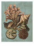 Shell and Coral on Aqua I